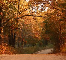 Fall on Bellview Road by Susan Blevins