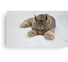 Lynx in Snow Canvas Print