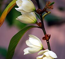 Magnolia  by Mattie Bryant