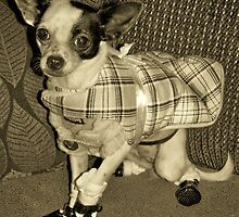 Chihuahua in Sepia by Nora Caswell