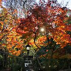 Autumn sun by Robyn Lakeman