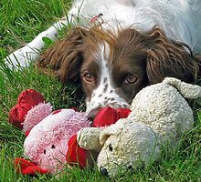 Poppy With Her Toys by lynn carter