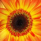 Pocket Full of Sunshine by Carol Barona