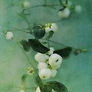Snowberries by Priska Wettstein