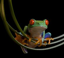 The frogs hammock by Angi Wallace