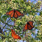 Butterflies by RebeccaBlackman