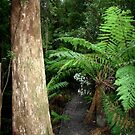 Inside the Otway Ranges - Australia by Chris Chalk