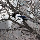 Magpie resting by prpltrtl8