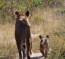 Lioness and cub by jozi1