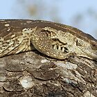Monitor lizard on tree by jozi1