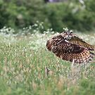 Eagle owl approaching by AngiNelson