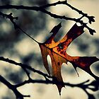 Hanging on Until Winter  by Michelle  Morris