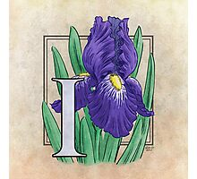 I is for Iris Photographic Print