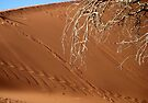 patterns in the sand, Sossusvlei by Margaret  Hyde