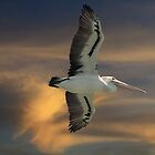 Soaring the Sunset by byronbackyard