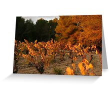Auumn colours Minervois Vineyard France Greeting Card