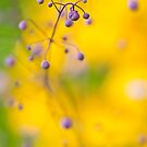 Thalictrum Decoration by Sarah-fiona Helme