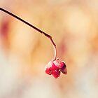 Defying winter by Milos Markovic