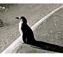 Penguin B&W Shadow Photographic Print