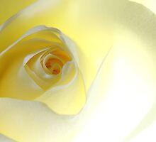 La vie en rose, #1 by Ronny Falkenstein