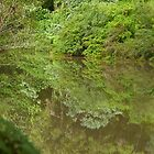 Reflections on Byrrill Creek. by Odille Esmonde-Morgan