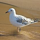 Young Seagull by Kelly Robinson