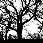 Trees Silhouette by Christina Apelseth