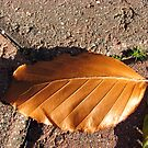 Fallen Russet Leaf by BlueMoonRose