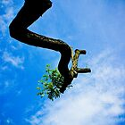Reaching the sky by deolandicho