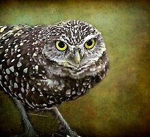 The Burrowing Owl  by LudaNayvelt