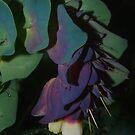 Unusual flower by yeuxdechat