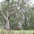 Abandoned Tractor and a Beautiful Tree by aussiebushstick