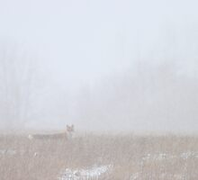Red fox in snowstorm by Remo Savisaar