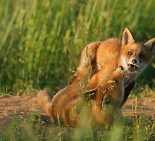 Play time by Remo Savisaar