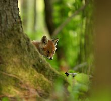 Behind the tree - red fox kit by Remo Savisaar