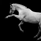 the prancing pony by Mitch  McFarlane