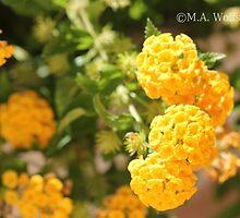 Golden Flowers by Monica Wolfson