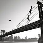 Birds Around Bridge by MPICS