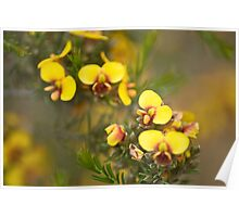 Parrot Pea Poster