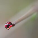 Carnelian by Photography by Mathilde