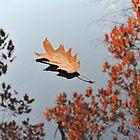 Oak Leaf by Kasia Nowak