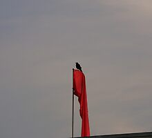 Raven On A Windsock by OneRudeDawg