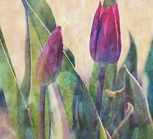 Tulips in the Garden by ©Maria Medeiros