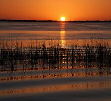 Florida Sunset by Susanne Van Hulst