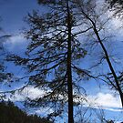 Lone Pine by CMCetra