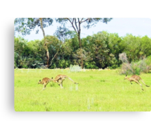 Hey guys, wait for me!! Canvas Print