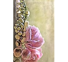 """Foxgloves & Roses ..."" Photographic Print"