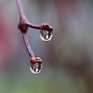 Rain Jewels by Olga Zvereva