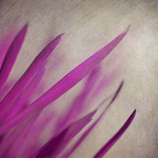 Pink Blades by Priska Wettstein