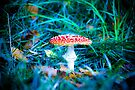 Fly Agaric by aka-photography